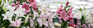 BBC Gardeners' World Live 2014 (13th - 14th June 2014)